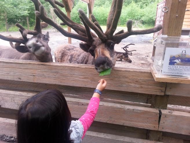k and reindeer