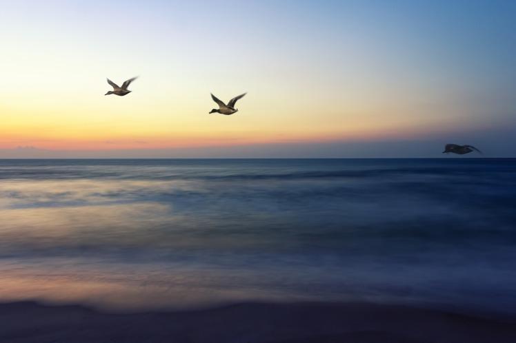 sunrise-flight-1364048_1920